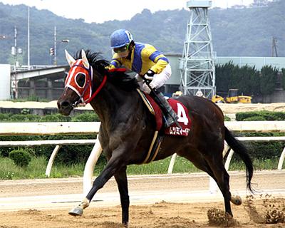 池田 敏樹騎手|ジョッキーインタビュー|地方競馬ならオッズパーク競馬
